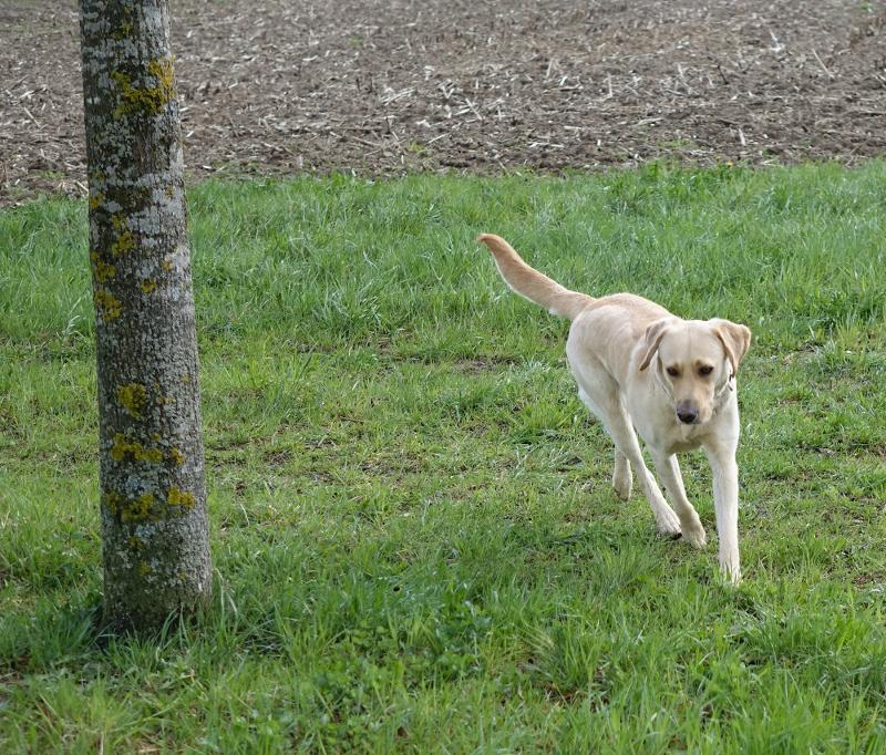 Gesunder und fiter Hund