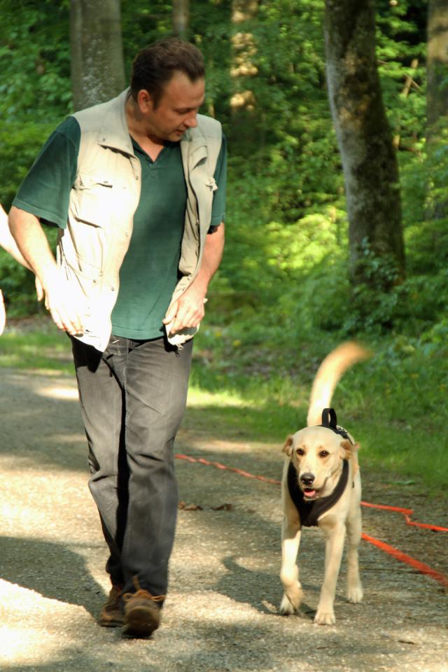 Hundeschule Training