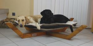 Hundebett, Schweiz, DOXX Lounge, Hygiene Hund, Labrador,