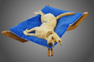 Doxx Lounge, Hundebett, Schweiz, Hund, Hundefutter, Schlafen Hund, Ernährung Hund, Hägglingen