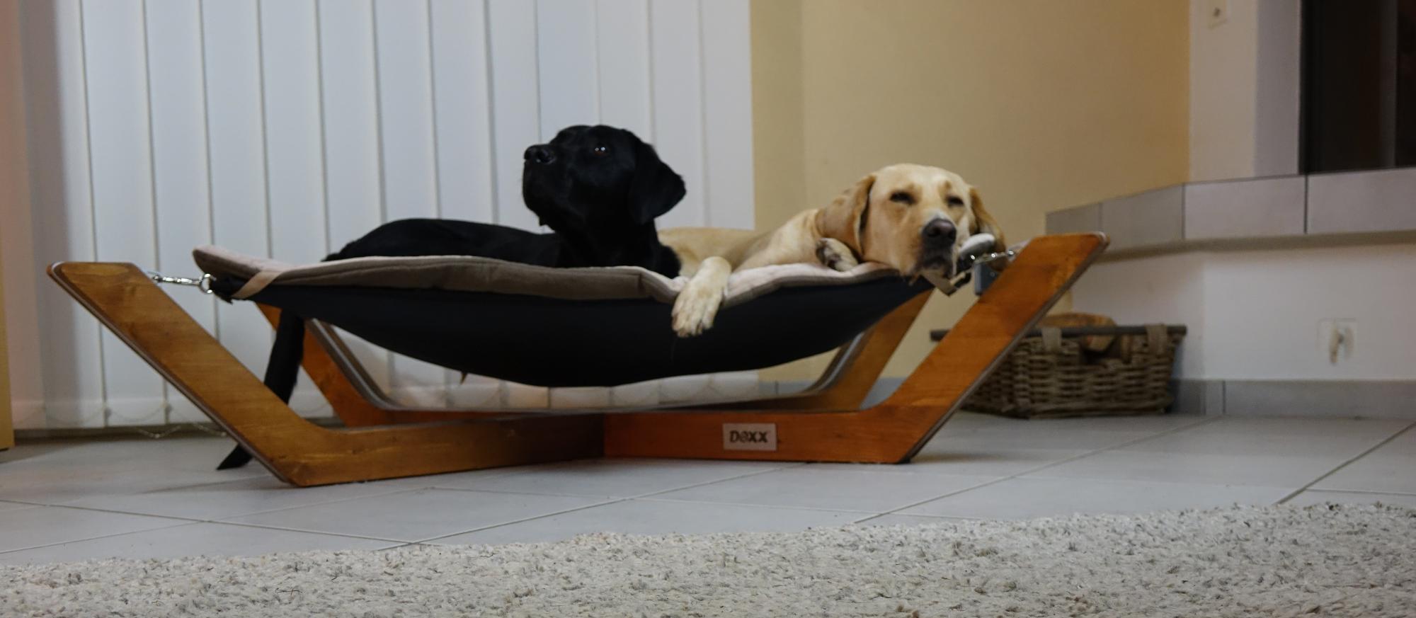 Doxx-Lounge, Labrador, schlafen, Hundebett, Hängebett, Hängematte, Hundehängematte