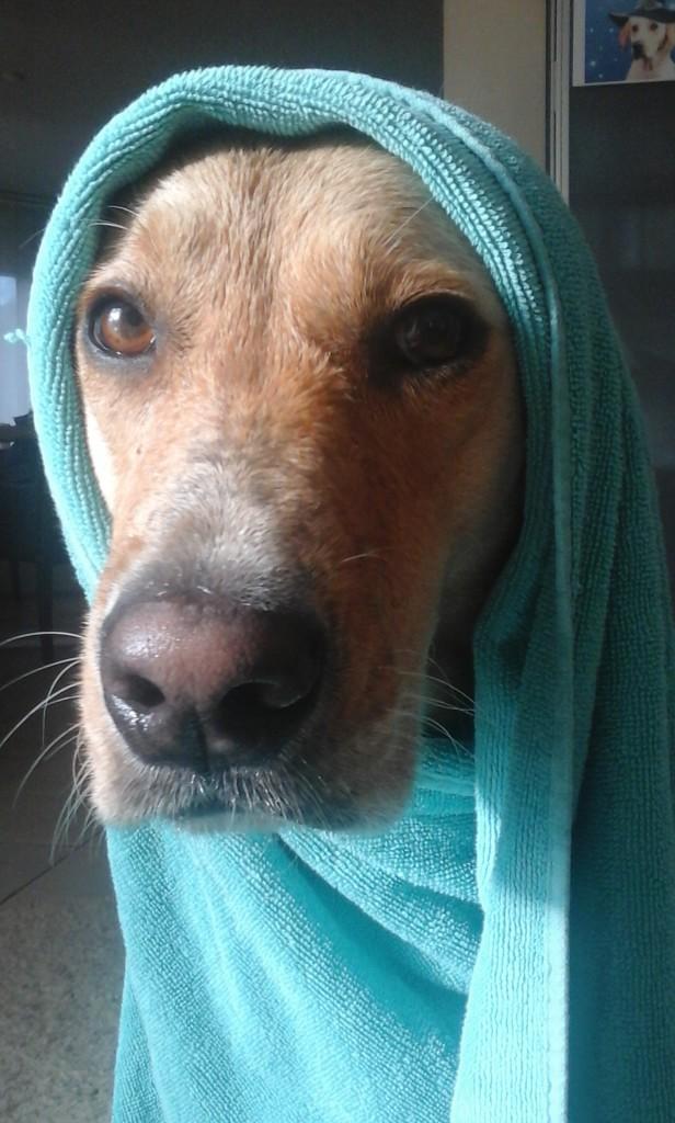 Nasser Hund,