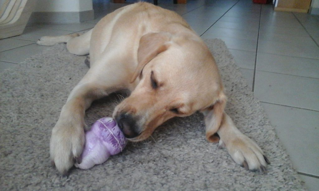 Hunde Glace selbstgemacht