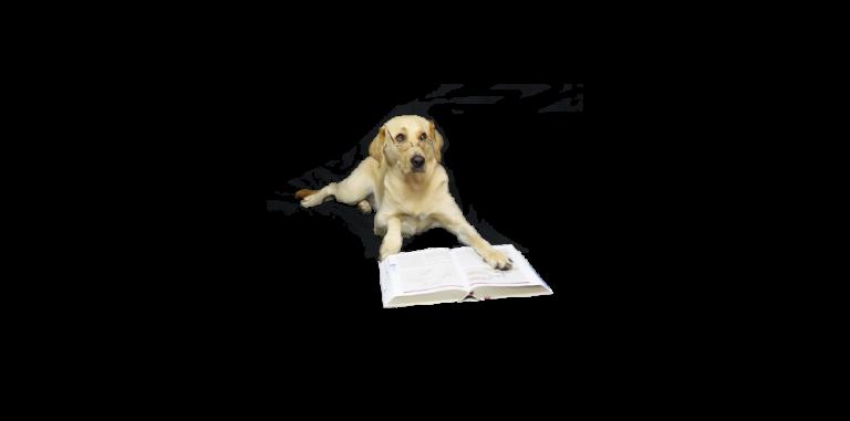 Hund und Wissen, Fragen und Antworten