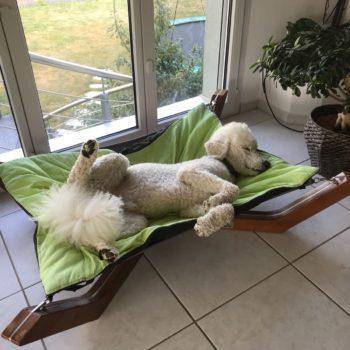 Die Schlafposition des Hundes sagt viel über ihn aus. Hundeliege für hohe Ansprüche, dieses Hundebett wird der Einrichtung Ihrer Wohnung oder ihres Hauses angepasst. Königspudel im Hundebett DOXX Lounge.